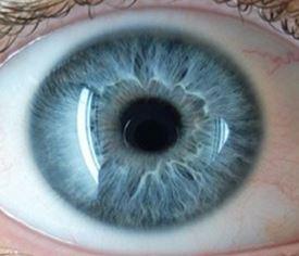 Íris em um olho humano - biometria